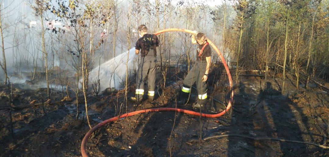 Pożar lasu w Kurzniach [GALERIA]