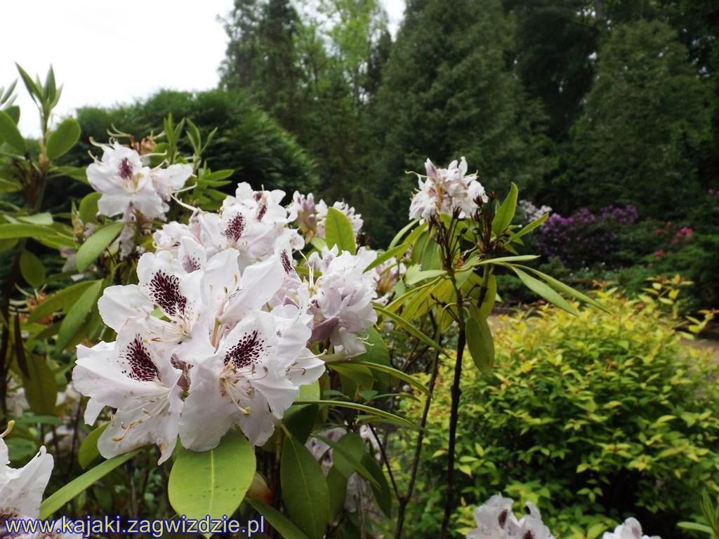 Ogród botaniczny w Zagwiździu zaprasza spacerowiczów