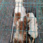 Psie piekło w pseudohodowli pod Brzegiem